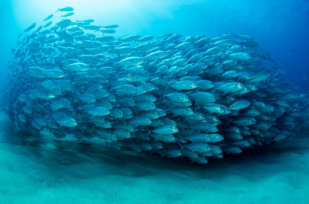 school of fish swimming together