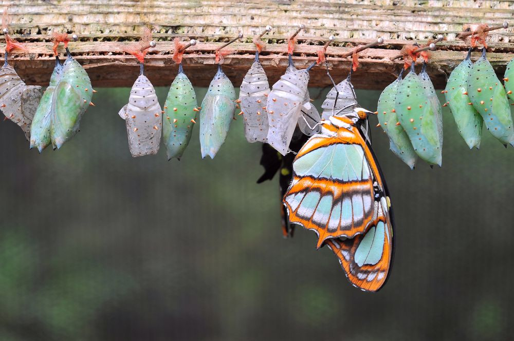 image alluding to conversion by showing many cocoons and a butterfly