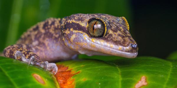 lizard in nature