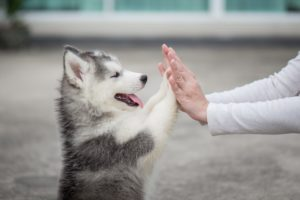 puppy giving a high five