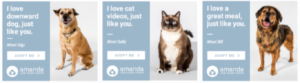 amanda foundation digital pawprint ads