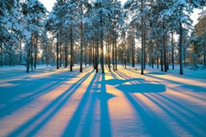 sun peaking through the trees in winter