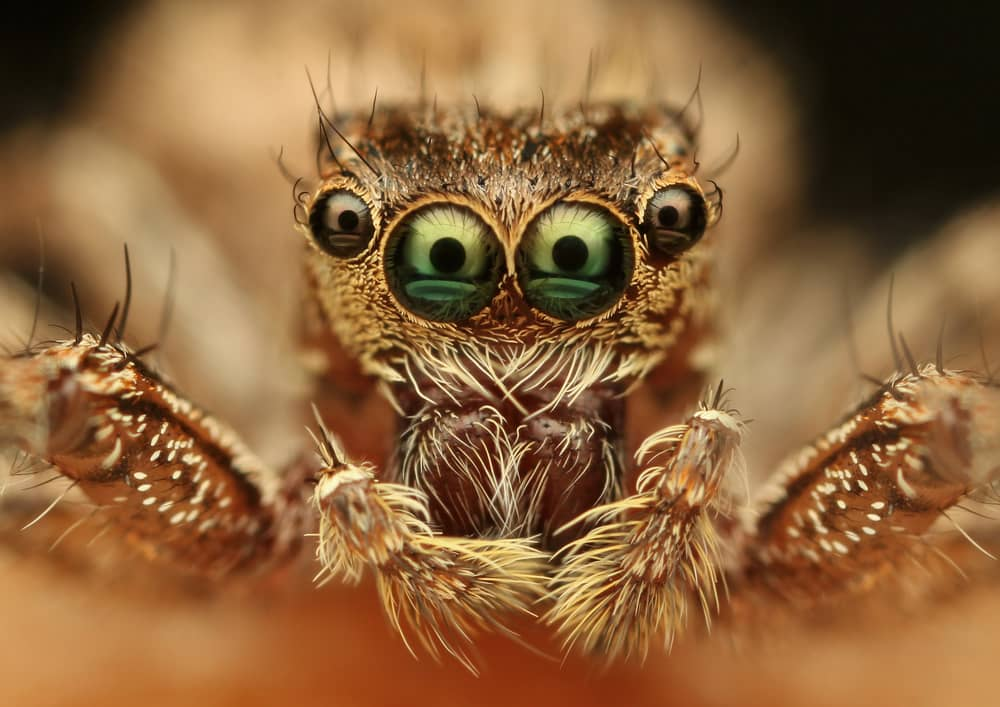 up close image of a spider